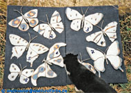 Steel sheet decoration butterflies.
